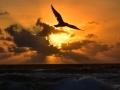 Sunrise: A spiritual Renewal