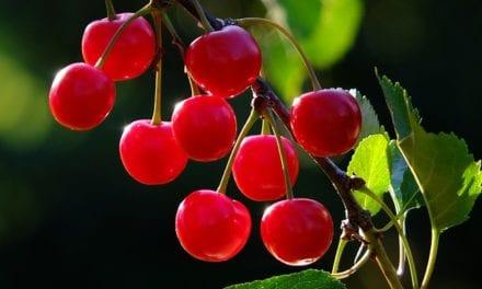 How to Eat Cherries by Ian Stuart