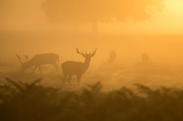 Deer Here By Vanessa Sylvester