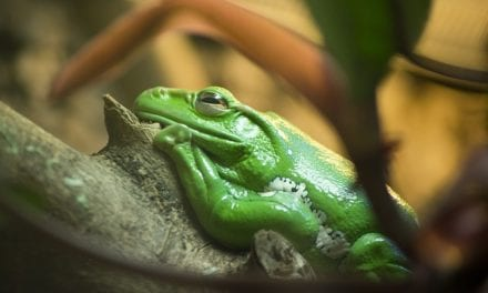 A Treefrog in my Father's Greenhouse by Joshua Brunetti